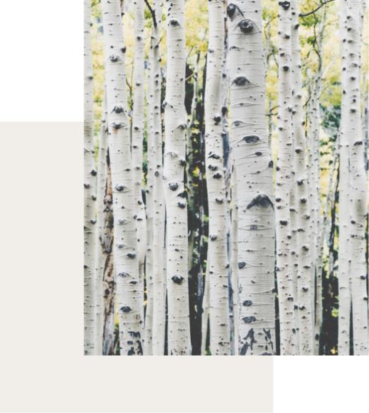 le bois est un matériau unique